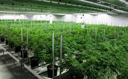 3 Tips for Creating Sustainability in Cultivation