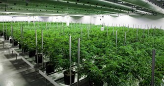 3 Tips for Creating Sustainability in Cultivation Featuring Brandy Keen, Co-Founder and Technical Advisor for Surna, Inc.