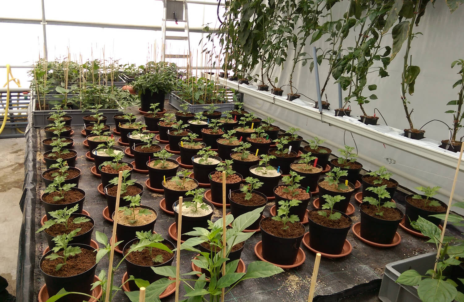 Field trial of using different growing mediums in the same set-up at Canna Research