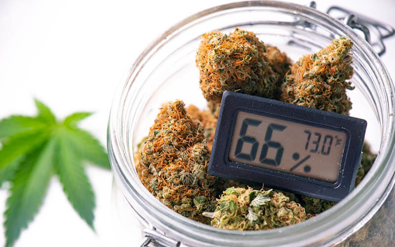 Cannabis buds in clear glass jar with humidity gauge.