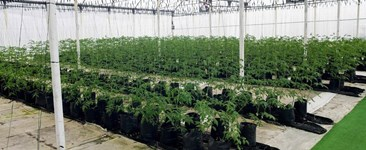 Reduce Your Overhead Costs with Greenhouses
