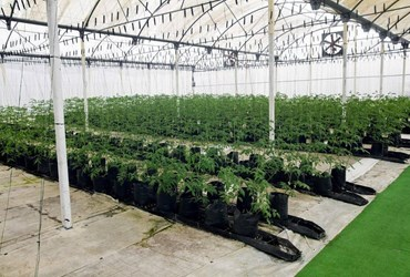 What is Greenhouse Cladding? - Definition from MaximumYield