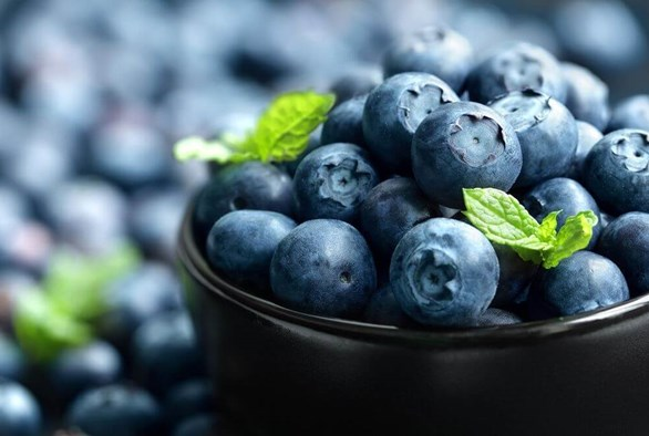 Year-round Blueberry Production