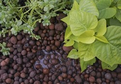 Choosing the Right Hydroponic Substrate