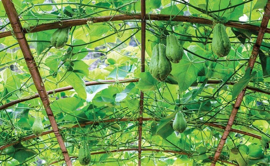 How to Trellis Your Plants Properly