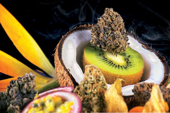 The Top 6 Types of Terpenes Found in Cannabis