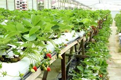 Why Grow in a Greenhouse?