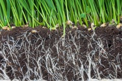 Root Rot Remedies