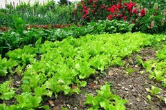 Gardening Sustainably: 12 Permaculture Principles