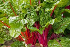 Top Vegetables to Grow Throughout Winter