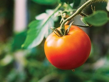 Why do some gardeners add organic components to their chemical fertilizers?