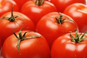 Tasty Tomatoes: Improving Flavor and Quality in Hydroponically Grown Tomatoes