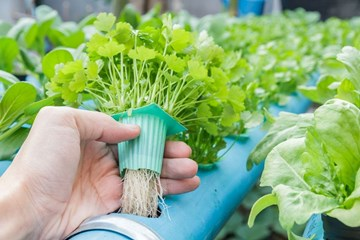 What's the Problem? Hydroponic Troubleshooting