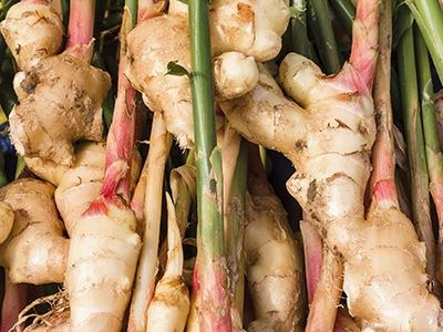 Hydroponic Ginger & Turmeric Production