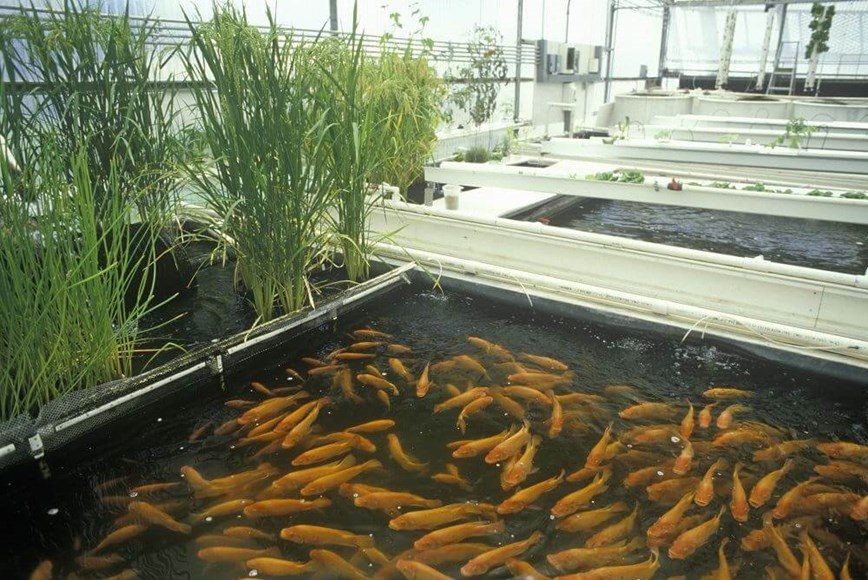 Managing Ph In Aquaponic Systems