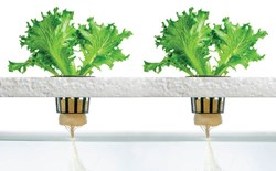Will Hydroponic Crops Ever Become Organic Certified?