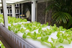 Aquaponics: The Key to a More Sustainable Future?