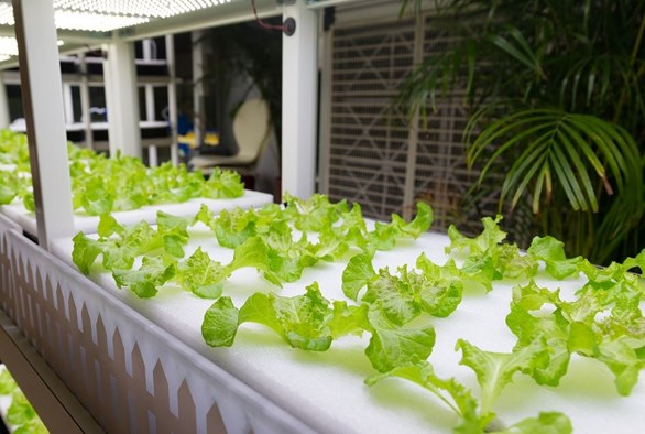 New Trends in Hydroponic Growing: What to Expect in 2016 and Beyond