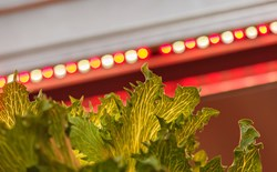 Understanding the Different Types of Grow Lights Available