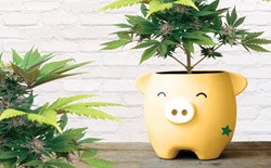 Potcoin: The Bitcoin Alternative for The Marijuana Industry