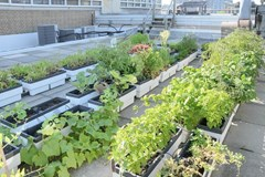 Gardening Up High: A Guide to Rooftop Growing