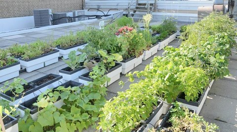 Urban farming is increasing in popularity as people become more concerned with where their food comes from.