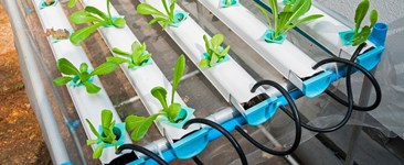 The How-To of Organic Hydroponics