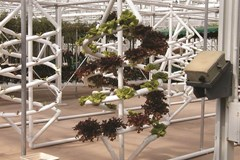Vertically Inclined: An Introduction to Vertical Farming