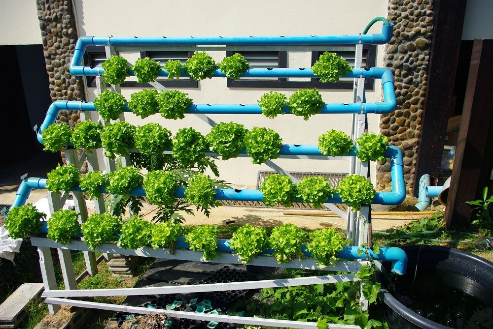 hydroponics the evolution of gardening Hydroponics is a subset of hydroculture, which is a method of growing plants without soil by using mineral nutrient solutions in a water solvent.