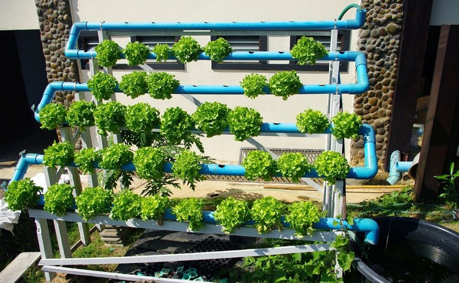 garden is hydroponic learn basics the what hydroponics systems of