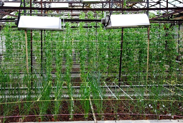 Powering Photosynthesis: How to Maximize Light Usage in Hydroponic Crops