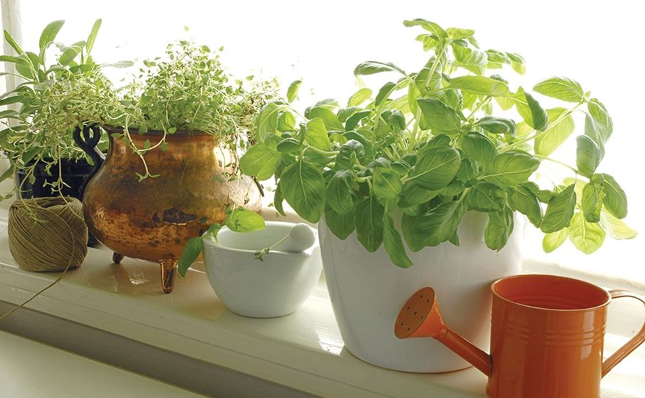 Low maintenance hydroponics self watering containers for Low maintenance garden pot plants