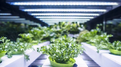 When it comes to indoor horticulture, maximizing the available light energy is the key to success. The more efficiently the light energy is...