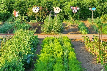 Growing Minds: Why School Gardens Matter Now More Than Ever