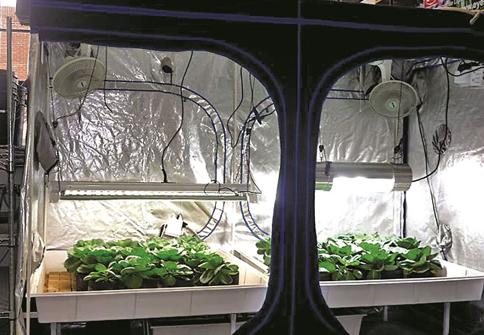 & 10 Tips for Gardening in Grow Tents