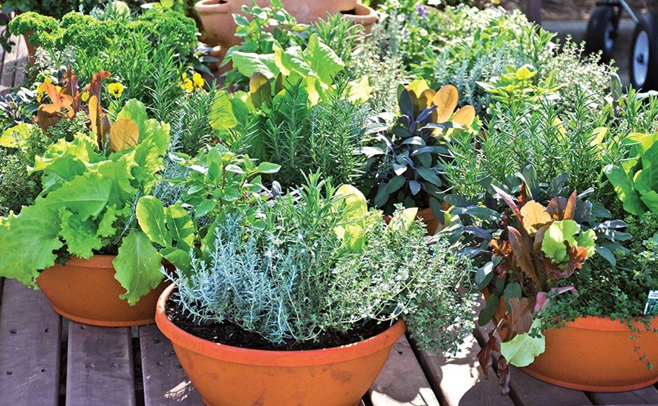 Contain Yourself: Seven Reasons to Consider Container Gardening
