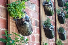 Growing Up: How to Create Living Walls of Edible Plants