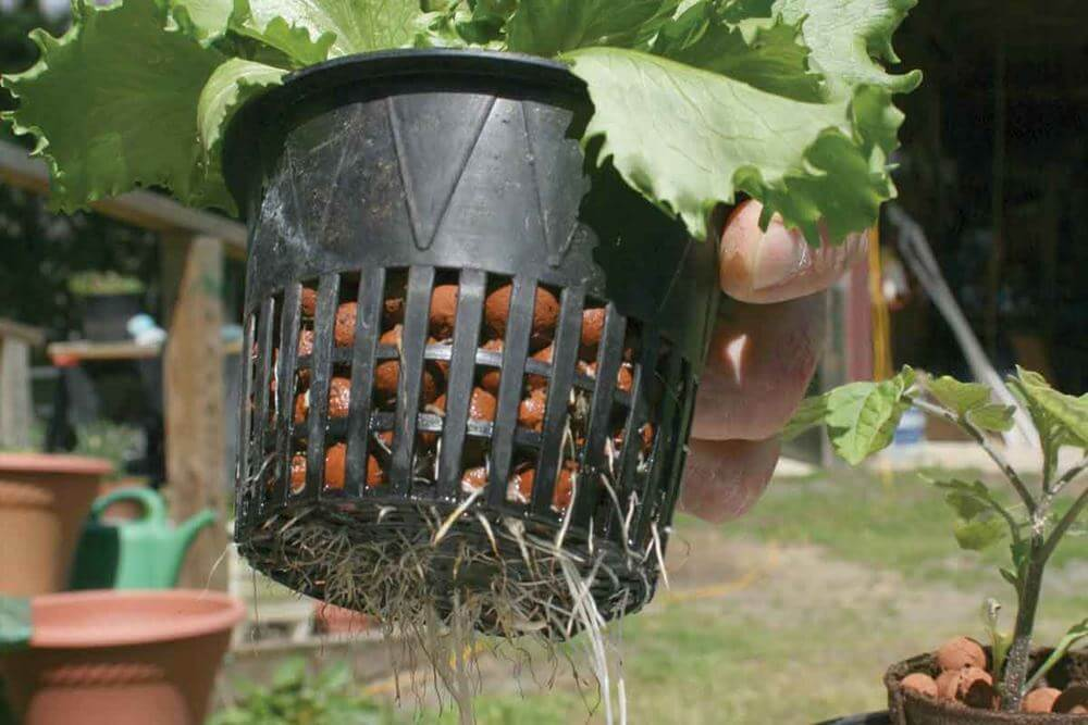 Take It Outside Why Outdoor Hydroponic Systems Make Sense
