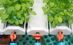 Ebb and Flow Hydroponic Systems