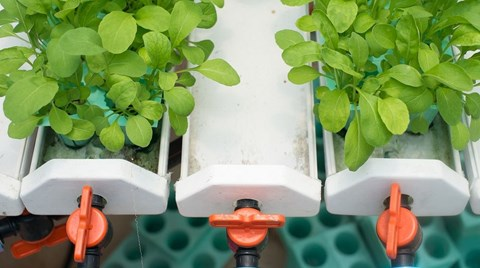An ebb and flow hydroponic system maximizes nutrient uptake and available oxygen in the root zone. Here's how these systems work and why...