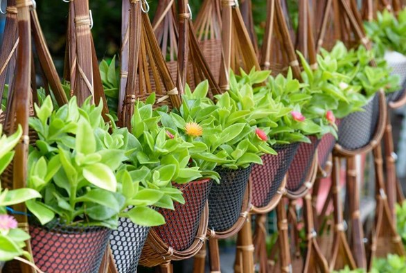 Small Space, Big Plans: How to Make the Most of Your Garden Space