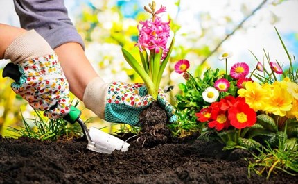 How to prepare the best soil for your flower beds mightylinksfo