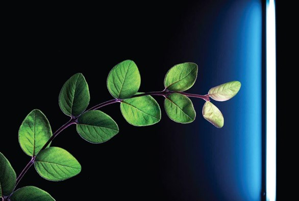 10 Facts on Auxins