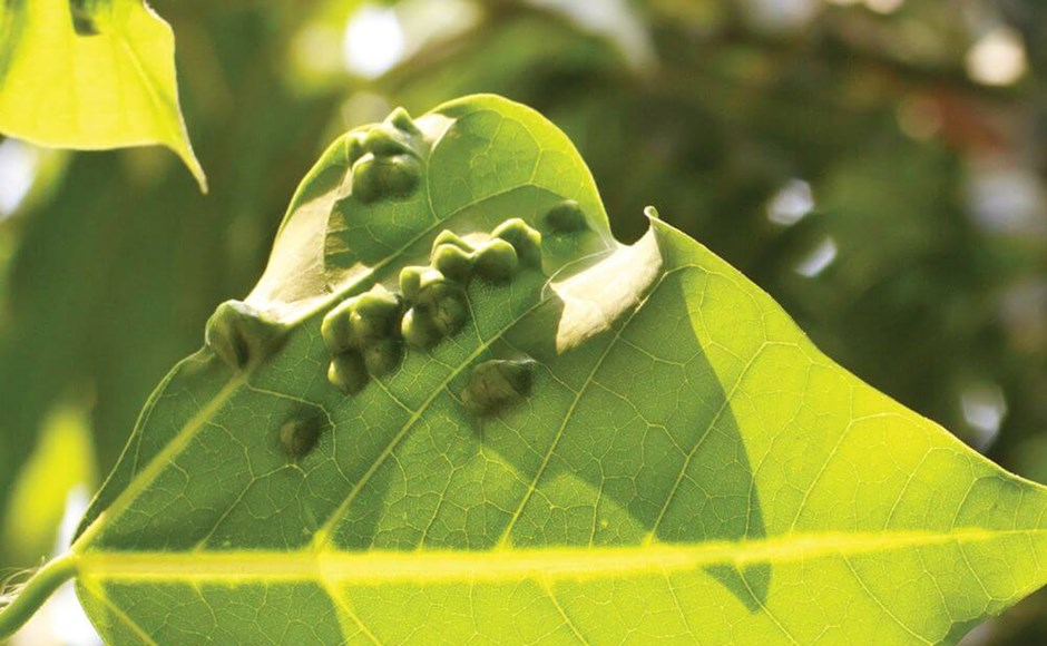 Could Your Plants Be Suffering from an Abiotic Plant Disease?