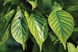 Think Your Plants Have Interveinal Chlorosis? Here's What to Do