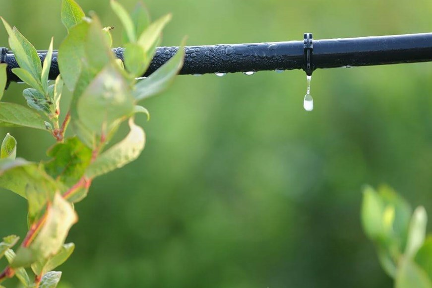 Get Your Drip On: The Advantages of Drip Irrigation
