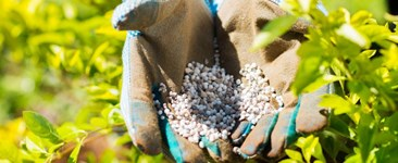 8 Crop Micronutrients Growers Can't Ignore