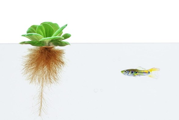 How to Start an Aquaponics System Part 2