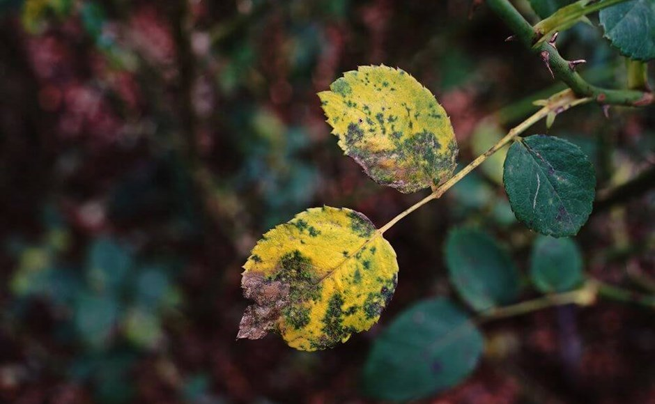 How to Identify the 5 Most Common Plant Diseases