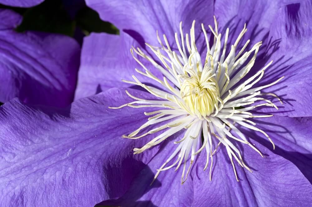 Incomplete flowers are generally unisexual flower